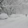 عاجل..عاصفة ثلجية كبيرة بإرتفاع ثلوج 25 سنتيمتر تضرب تورنتو وجنوب أونتاريو بدأً من غد
